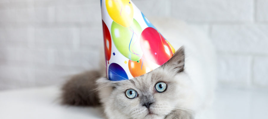 10 Cute Ideas For A Cat Themed Birthday Party