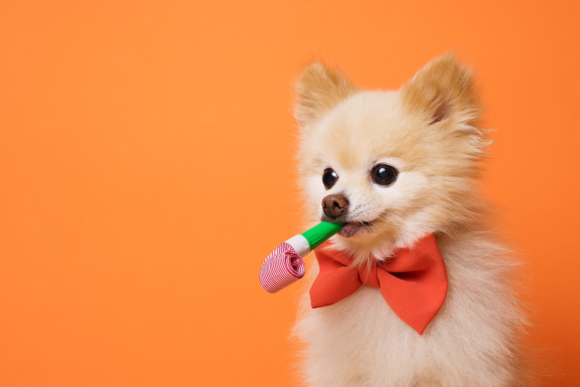 It's Paw-ty Time! How to Celebrate Your Dog's Birthday